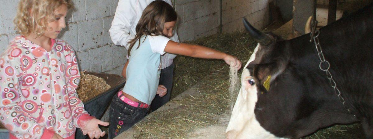 Die Kuh macht muu... und was weißt du? Kindergeburtstage auf dem Bauernhof