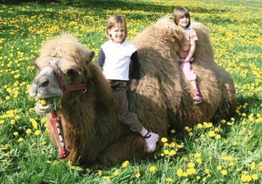 Kindergeburtstag hoch zu Kamel